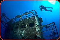 oahu scuba diving sea tiger