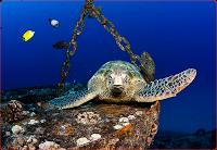 oahu wreck scuba diving hawaii