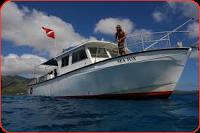 seafox humpback whale tour