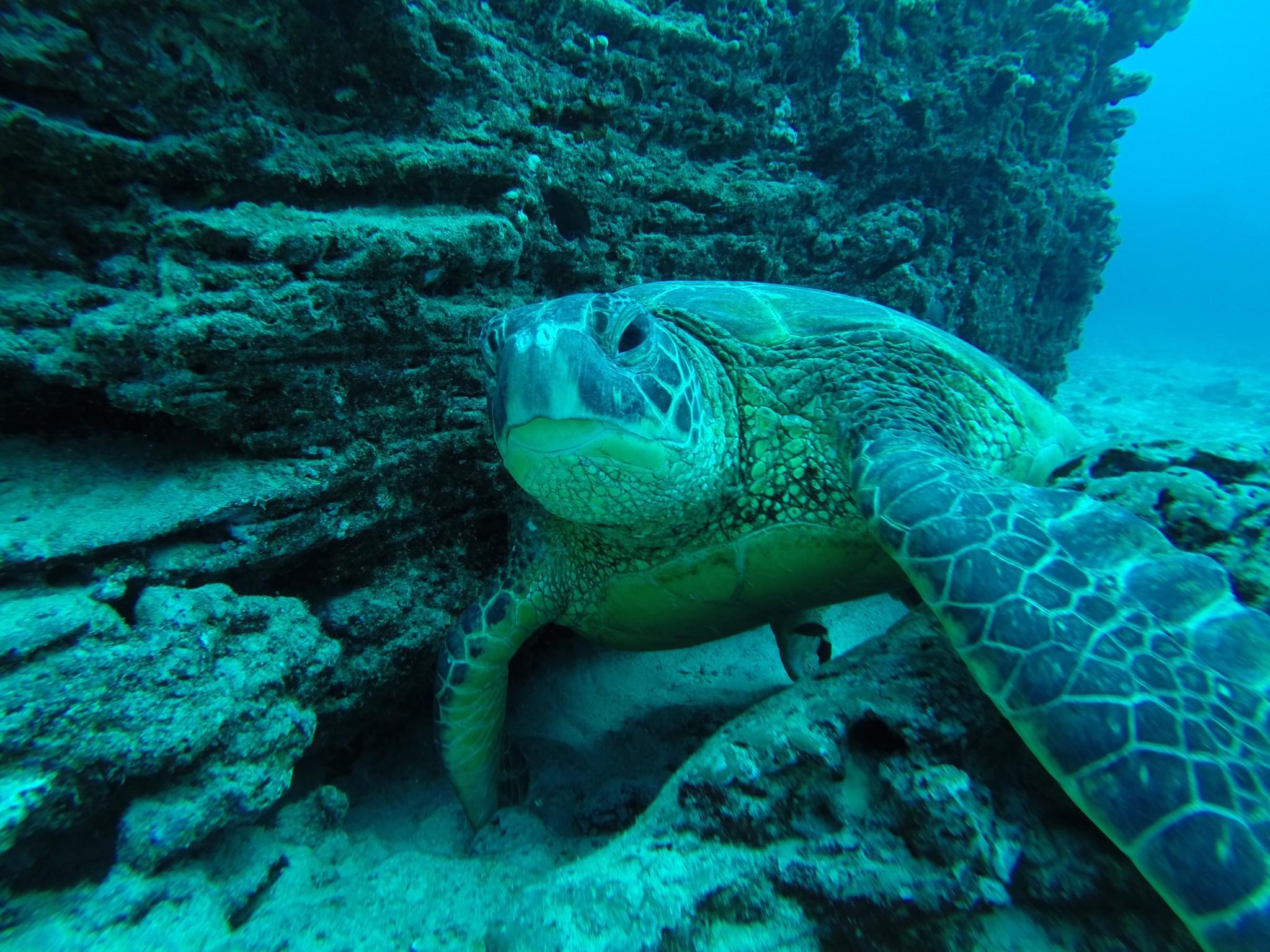 Dive Hawaii Maunalua Bay 76