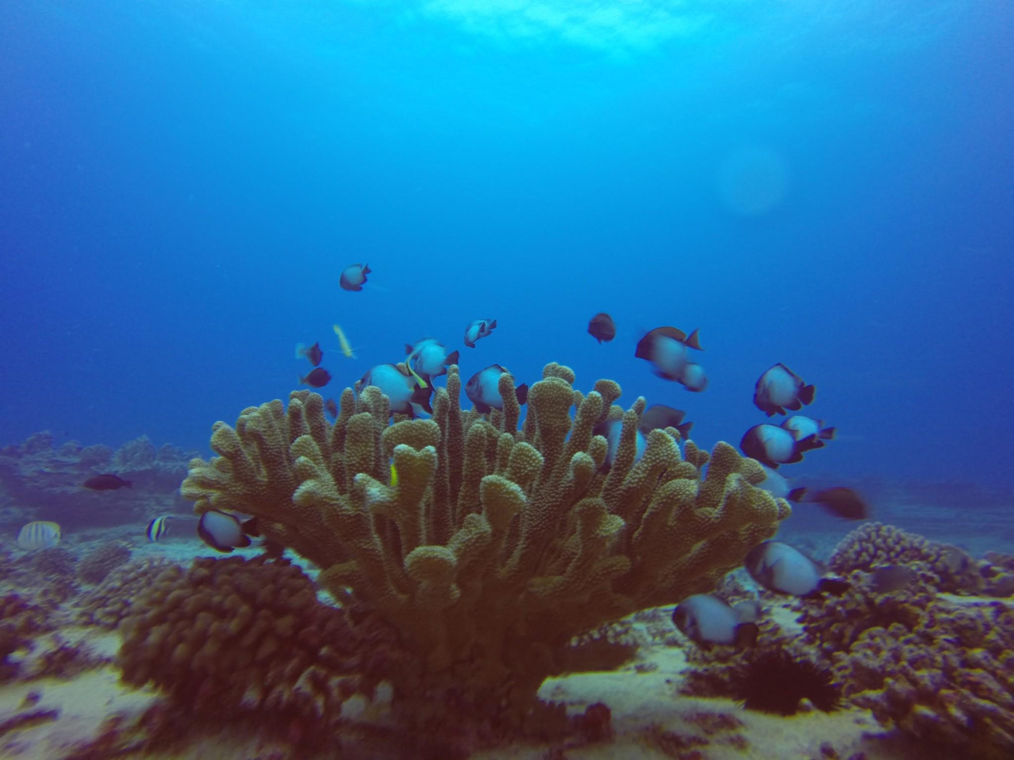 Dive Hawaii Maunalua Bay 34