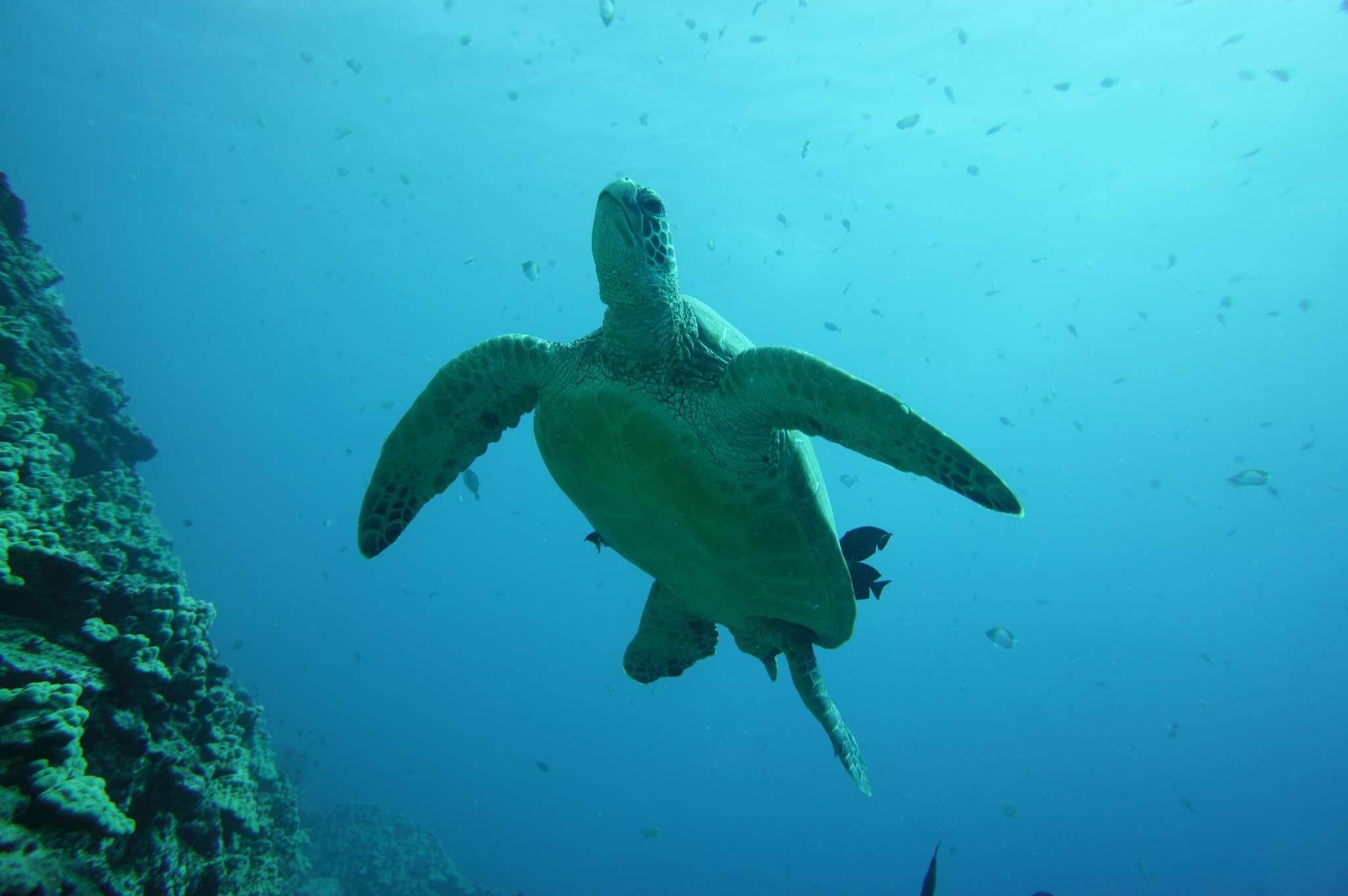 Dive Hawaii Maunalua Bay 37