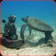 budda turtle