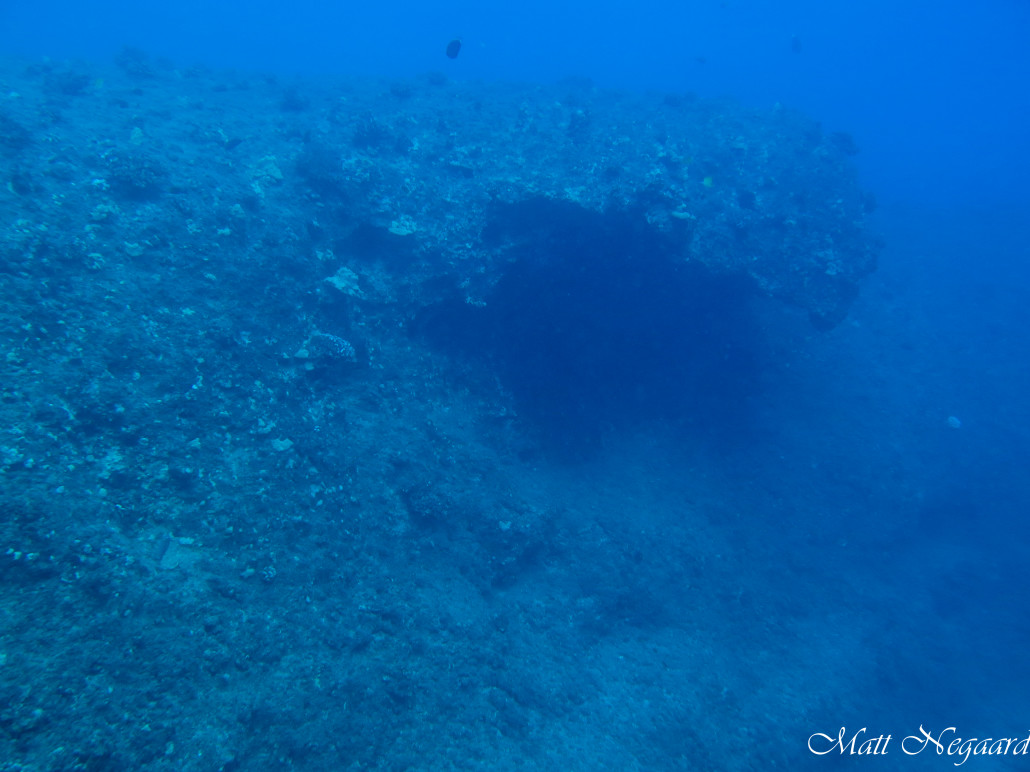 Where\'s Toto? - 29 November - Island Divers Hawaii