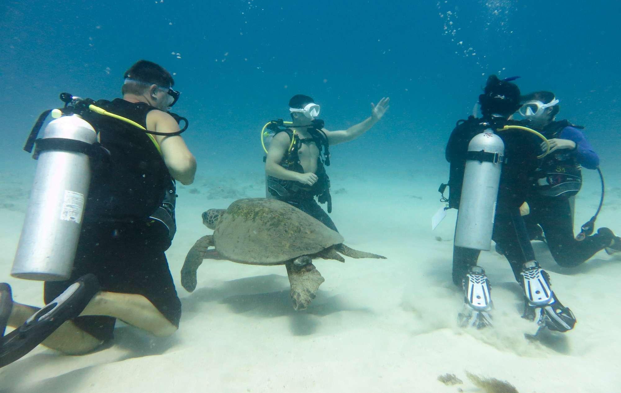 Open Water Padi Certification Island Divers Hawaii