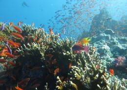 Fiji Trip Report
