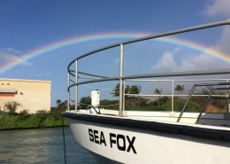 Our scuba divers spotted rainbow in seafox boat