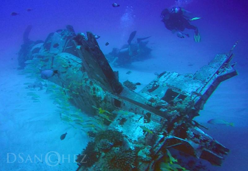 Dive Hawaii Maunalua Bay 86