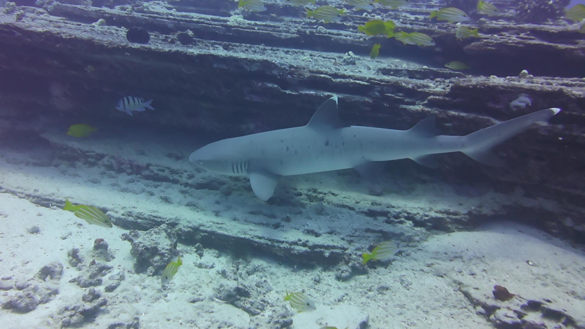 Dive Hawaii Maunalua Bay 18