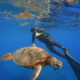 free diver with green sea turtle at makaha caverns